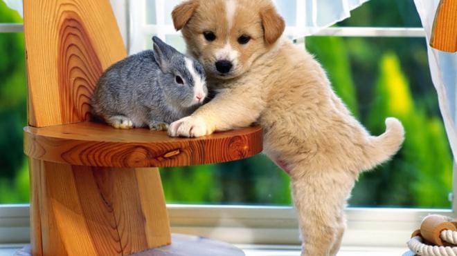 Салон красоты для домашних животных