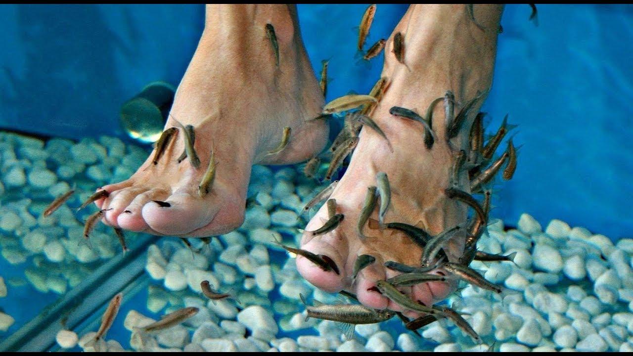 Бизнес-идея: пилинг рыбками гарра-руффа