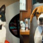 Бизнес идея — уход за животными, зоомагазин