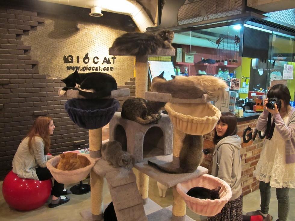 Концепция идеи открытия котокафе