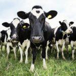 Фермерское хозяйство, как источник дохода