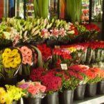 Цветочный бизнес — советы владельцев